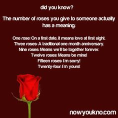 The number of roses you give to someone actually has a meaning...