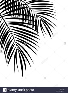 Palm Leaf Vector Background Illustration Stock Photo