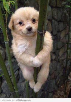 panda puppy <3