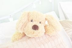 ♡ chin up buttercup ♡ Just Girly Things, Cute Little Things, Pretty Little, Pretty In Pink, Tumblr Quality, Finding Neverland, Kawaii Plush, Kawaii Shop, Plushies