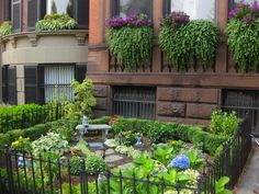 Beautiful garden and window boxes in front of Brownstone. Boston Brownstone, Landscape Design, Garden Design, Window Planter Boxes, Garden Spaces, Front Yard Landscaping, Outdoor Rooms, Curb Appeal, Beautiful Gardens