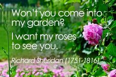 Wont you come into my garden? I want my roses to see you. Richard Sheridan (1751-1816)    #gardening #roses #quotes #KingsMeadow