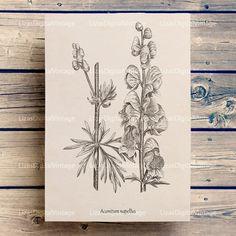 #LizasDigitalVintage Antique botanical print Botanical print by LizasDigitalVintage