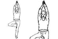 Improve your Memory and Balancing by Vrikhasana   The Tree Pose  #yogi #yoga #handstand #yogapose#Igyoga #fityoga #yogahealth #fityoga #yogafitness