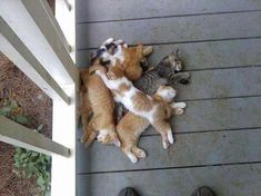 So that's where I left my pile of cats.