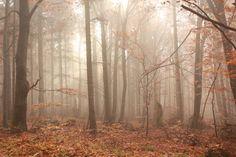 Forest 4 - stock57 by whyou.deviantart.com on @deviantART