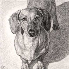 Google Image Result for http://www.3doxies.com/files/2008/04/evelyn-morris-hecht-dachshund-drawing-of-odie.jpg