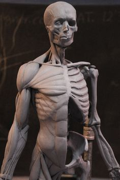 Daniel Peteuil art gallery. Anatomy Study, Anatomy Reference, Art Reference, Traditional Sculptures, Art Carved, Models, Human Anatomy, Figure Drawing, Human Body