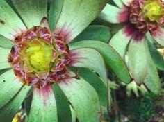 Houseplants, Container Gardening, Succulents, Around The Worlds, Instagram Posts, Indoor House Plants, Succulent Plants, Container Garden, Potted Plants