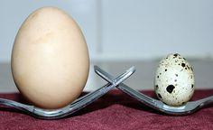 Big and Small - Big Chook and small Quail Egg - Campbell Town TAS
