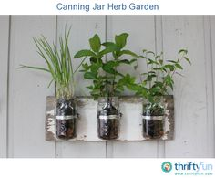 A cute way to have a small herb garden in your kitchen or just outside your front door.
