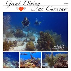Love to dive have a great weekend ...  #scuba #relaxedguideddives #curacao #tauchen #fun #diving #reef