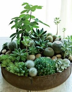 Galvanized trays are everywhere it seems so why not turn one into a little garden. If succulents aren't your thing then try using slower growing plants. Whatever you decide I am certain it will brighten your day!