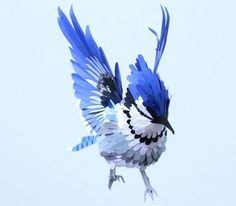 just-artPaper Bird Anatomy by Diana Beltran books, paper