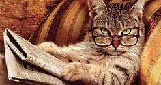 10 cosas que piensan los gatos de nosotros (muy divertido)
