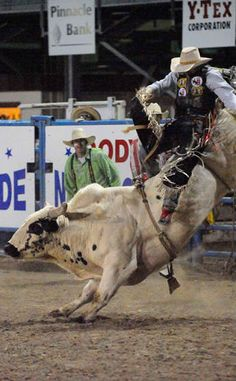 Cody Nite Rodeo | Travel | Vacation Ideas | Road Trip | Places to Visit | Cody | WY | Rodeo | Tourist Attraction | Horse Racetrack