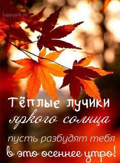 С добрым осенним утром картинки. Good Morning, Wish, Life Quotes, Positivity, Words, Movie Posters, Pictures, Bonjour, Bom Dia