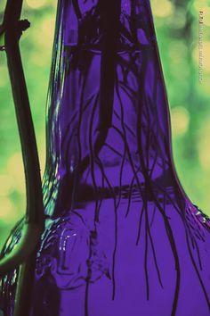 raices www.facebook.com/fotosjimenadelmarmol