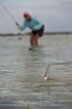 #Bonefishing Belize - Turneffe Flats #Belize #Flyfishing