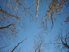 Lorenza Fonda through the branches