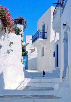 Pure white in island,