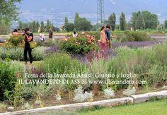 Festa della lavanda 2015 (Festa della lavanda di Assisi)