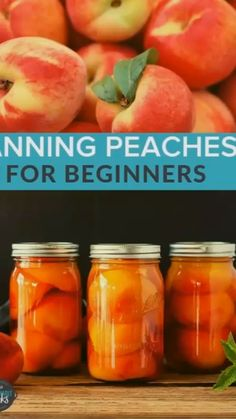 An easy step by step tutorial on Canning Peaches This recipe for how to can peaches is perfect for beginners and experienced canners alike Instructions include lowsugar a. Pressure Canning Recipes, Home Canning Recipes, Peach Recipes For Canning, Pressure Cooking, Peach Jam Recipes, Can Peaches Recipes, Jelly Recipes, How To Can Peaches, How To Store Peaches