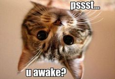 My cat does this too me all the time its all you hear in the night