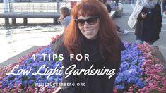 4 Tips for Urban Low Light Gardening