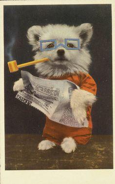 vintage postcard Pipe SMoking Newspaper Reading Dog by maclancy