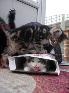 Cat めっちゃ踏み潰されてるしー