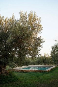 A grove of ancient olive trees surrounds the swimming pool at Olives House in Sicily