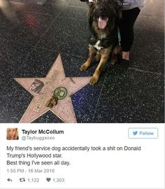 ''My friend's service dog accidentally took a sh*t on Donald Trump's Hollywood star. Best thing I'm seen all day.'' source: http://www.dumpaday.com/funny-animals/funny-animal-pictures-of-the-day-25-pics-37/