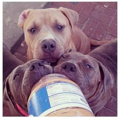 """Happiness Is... our pups licking peanut butter"" -- Lili Petkovic"