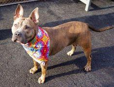 dog kennel entertainment center #dogkennelentertainmentcenter Shelter Dogs, Animal Shelter, Igloo Dog House, Open Adoption, Kinds Of Dogs, Adopting A Child, Pitbulls, Dog Cat, Nyc