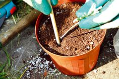 Ako rozmnožiť levanduľu   Urob si sám Gardening, Lawn And Garden, Horticulture