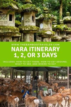 JAPAN TRAVEL ITINERARY: Are you planning on visiting Nara during your trip to Japan? Wondering how to see the famous deer of Nara? Wanna know what not to miss? Where to eat? Read this detailed itinerary for seeing Nara in a day! Asia Travel, Japan Travel, Japan Trip, Solo Travel Tips, Travel Guide, Nara, Outdoor Life, Day Trip, Kyoto