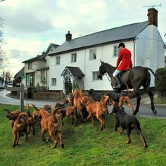 Fox Hunting (preferably in Ireland) Horse Fly, Horse Riding, Fox Hunting, The Fox And The Hound, Horse World, Photos Voyages, Country Life, Country Living, Beautiful Horses