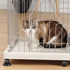 The Wire Cat Cage offers two perches for your cat to feel superior and has enough room in the bottom for a litter box or scratching post! Cat Playpen, Cat Crate, Cat Kennel, Small Animal Cage, Cat Enclosure, Pet Cage, Large Animals, Litter Box, Cool Pets