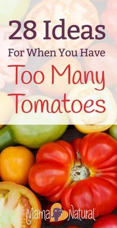 Late in the summer, many gardeners end up with too many tomatoes! Here are 28 ways to use all those extra tomatoes from your garden.