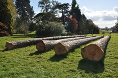 A beautiful view over Westonbirt arboretum with the felled trees in the forefront