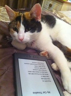 A cat who has been reading my first cat book in the electronic format, and is now trying to decide whether it likes it enough to buy the real, paper version as well.