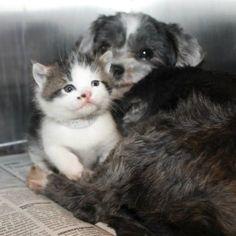Estão Salvando Um Cão, Mas O Que Encontram Surpreende Até Os Veterinários!