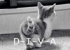 Diva #kitten