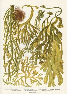[CasaGiardino] ♡ Vintage Botanical Print Antique BRITISH by VintageInclination