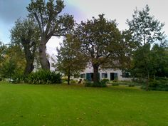 Luscious Lawns, under Old Oak trees - Buitenverwachting Wine Estate, Constantia, Cape Town.  Perfect for their Summer picnics....