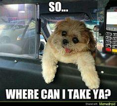 So...Where can i take ya?