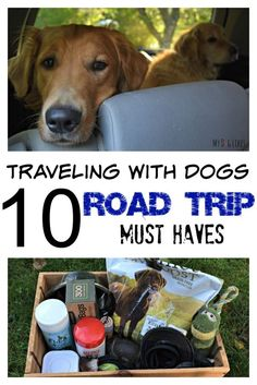 10 must-haves for stress-free road trips with your pet(s)!