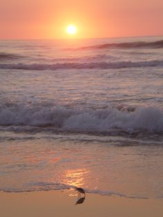 September, I would loove to be laying on that beach right now Assateague Island National Seashore, Chincoteague Island, Ocean City Md, Free State, Sand Sculptures, Beach Color, Sand And Water, Beautiful Sunrise, Beach Scenes