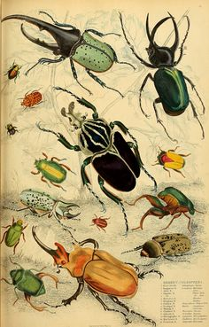 """Image from page 562 of """"Edinburgh journal of natural history and of the physical sciences"""" Science Illustration, Nature Illustration, Antique Illustration, Botanical Illustration, Scientific Drawing, Bug Art, Insect Art, Nature Drawing, Bugs And Insects"""